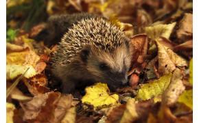 Jeseň v záhrade: Hrabanie lístia, zber úrody a jej uskladnenie